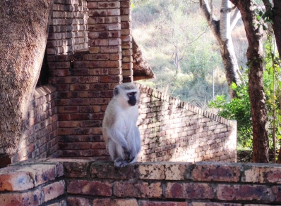 This was taken at a lodge within Kruger Park.